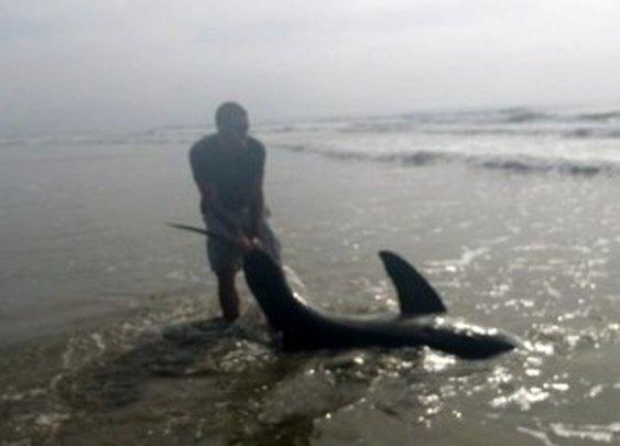 Great white shark caught from beach by U.S. Marine