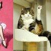Cats Pose Like Pin Ups | Incredible Things