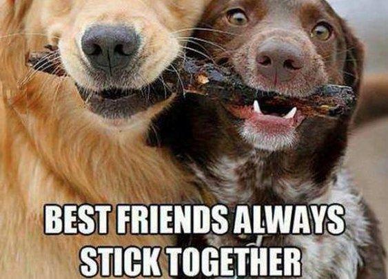 Best friends always stick together