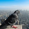 How Our World Would Look If You Were A Bird « PixTale | News stories in photographs from Around The World