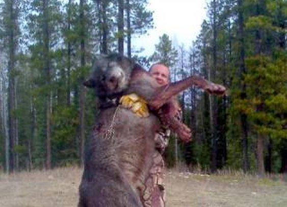 Giant Idaho Wolves