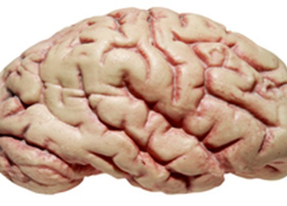"HowStuffWorks ""10 Amazing Things People's Brains Have Done"""