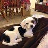 19 Adorably Awkward Mixed Breed Dogs