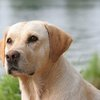 23 Most Popular Dog Breeds In The United States