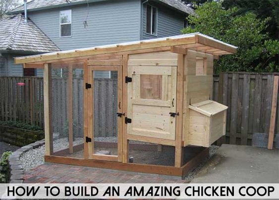 How To Build An Amazing Chicken Coop - SHTF Preparedness