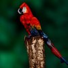 BBC - A woman painted like a parrot: Eight top images