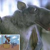 10 Bizarre Bats You Won't Want To Meet On A Dark Knight