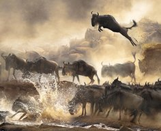 Winners of the 2014 Sony World Photography Awards