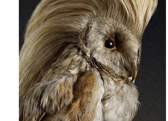 The Worst (or best?) Taxidermy EVER!