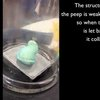 What happens if you expose a Peep to vacuum?