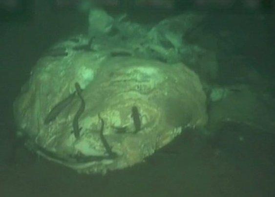 Deep-sea 'graveyard' reveals fate of dead ocean giants