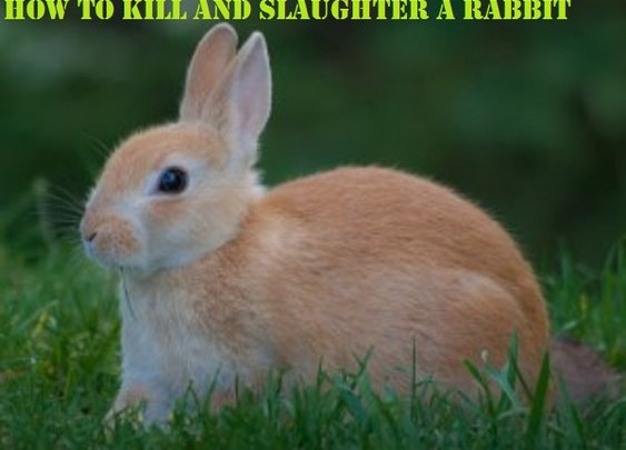 How to Humanely Kill, Skin, and Slaughter a Rabbit - Craft Like This