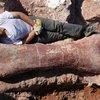 BBC News - 'Biggest dinosaur ever' discovered