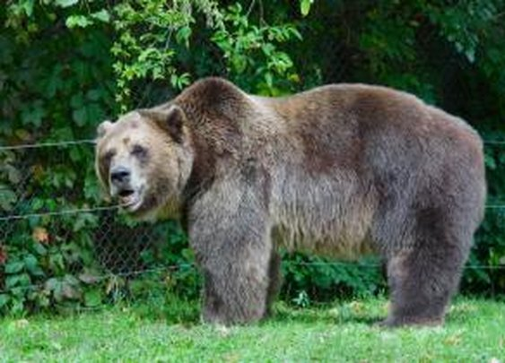 Woman attacked by bear near Alaska military base heroically walked 2 miles for help