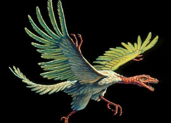 Archaeopteryx: X-rays shine new light on mystery 'bird'