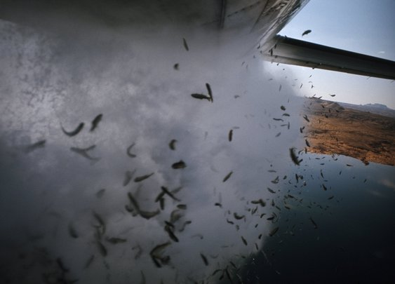 Hundreds of fish to fall from the sky into Utah lakes