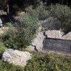 George Harrison memorial tree killed by beetles