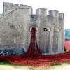 Stunning Pics Of The Tower Of London's Poppies | LBC