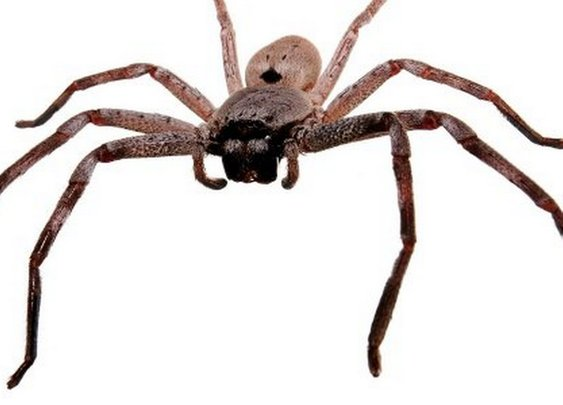 How not to kill a spider: Man sets fire to own house by trying to kill spider