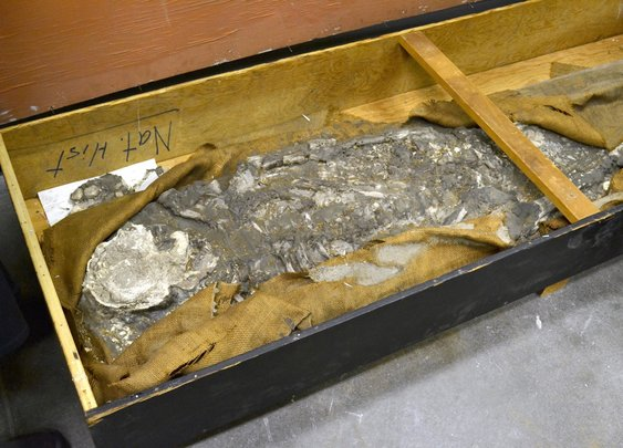6,500-Year-Old 'Noah' Skeleton Discovered in Museum Basement