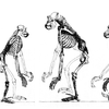 Future Human Evolution - Business Insider