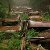 Classic Cars stored in forest since WWII.