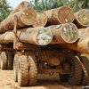 Liberia signs 'transformational' deal to stem deforestation