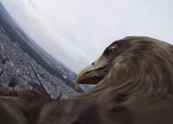 GoPro On An Eagle Over Paris