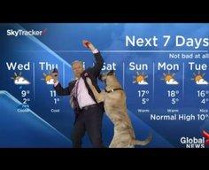Weatherman vs Dog News Blooper