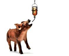 How to Raise a Pig That Tastes Like Whiskey - Popular Mechanics