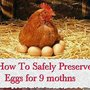 How To Safely Preserve Eggs for 9 mothns - LivingGreenAndFrugally.com