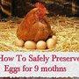 How To Safely Preserve Eggs for 9 mothns - LivingGreenAndFrugally.com