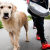 Best stray dog ever follows adventure racing team on 430-mile journey - ESPN