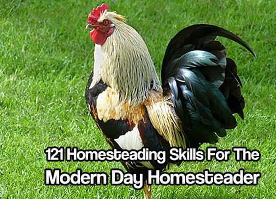121 Homesteading Skills For The Modern Day Homesteader - SHTF & Prepping Central