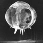 Ultra-Fast Nuclear Detonation Pictures