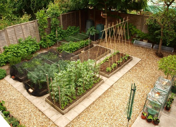 10 useful gardening tips
