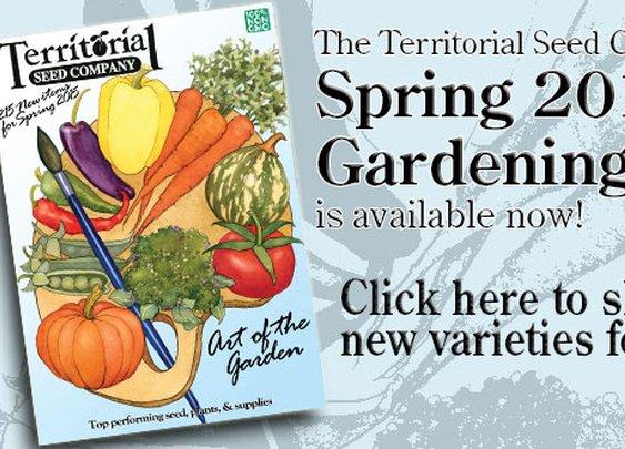 Vegetable Seeds, Flower Seeds, Herb Seed, Garden Seed - Territorial Seed Company