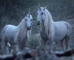 Hilarious adexplains why unicorns disappeared
