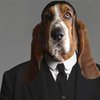 The Dogs of Downton Abbey, Presented By Dogster | Dogster