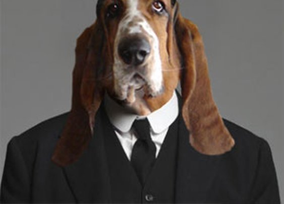 The Dogs of Downton Abbey, Presented By Dogster   Dogster