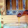 New beehive design doesn't disturb bees when you harvest honey