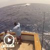 Teen Reels In A 1,000-Pound Blue Marlin - Digg