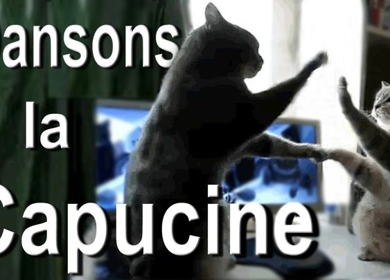 Cats playing Pattycake- you won't believe what happens!