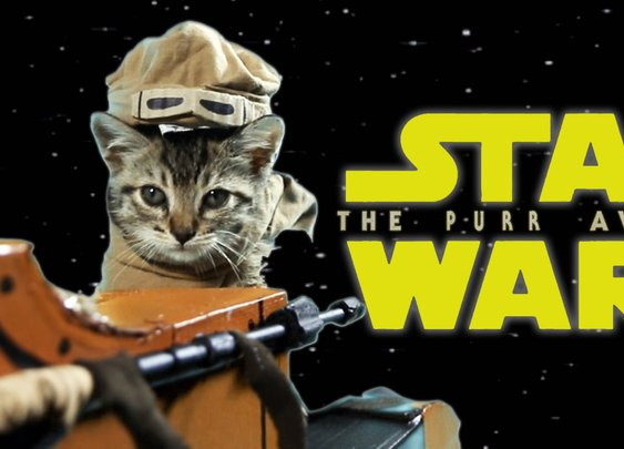 Star Wars: The Purr Awakens - YouTube