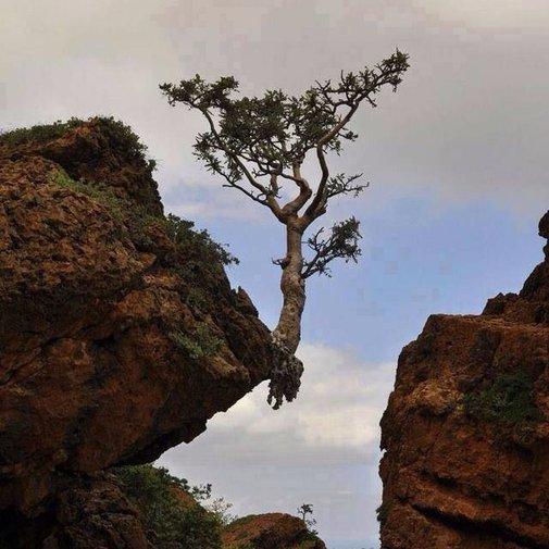 La nature trouve toujours un chemin | Curiosités de Titam