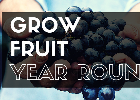How to Grow Fruits in Your Garden All Year Round