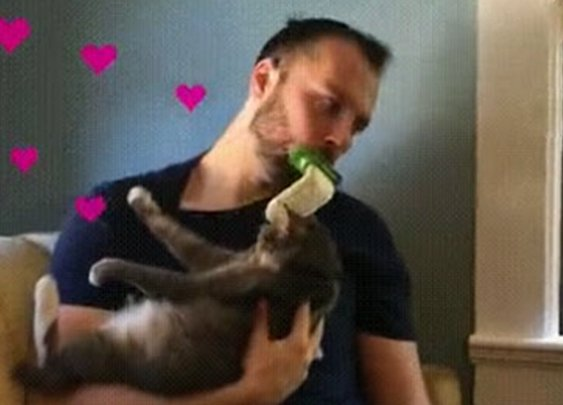 You Can Finally Lick Your Cat With This Innovative Brush | Bored Panda