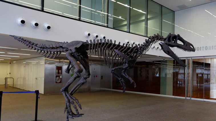 T. rex wasn't the only dinosaur to evolve pitifully puny arms - The Washington Post
