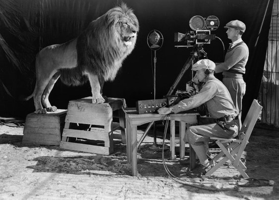 Did an MGM lion really kill its trainer?
