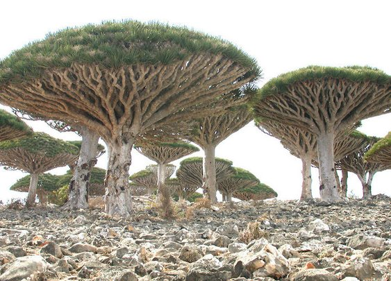 "Isolated Island with Strange Plant Life is ""The Most Alien-Looking Place on Earth"""